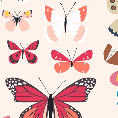 Natural History – Butterfly Box (Bright)